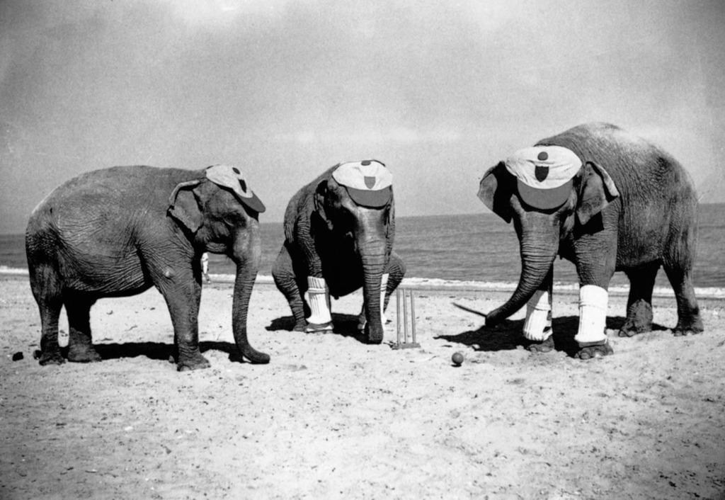 elephant_cricket.jpg